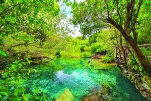 La réserve écologique Ojos Indigenas